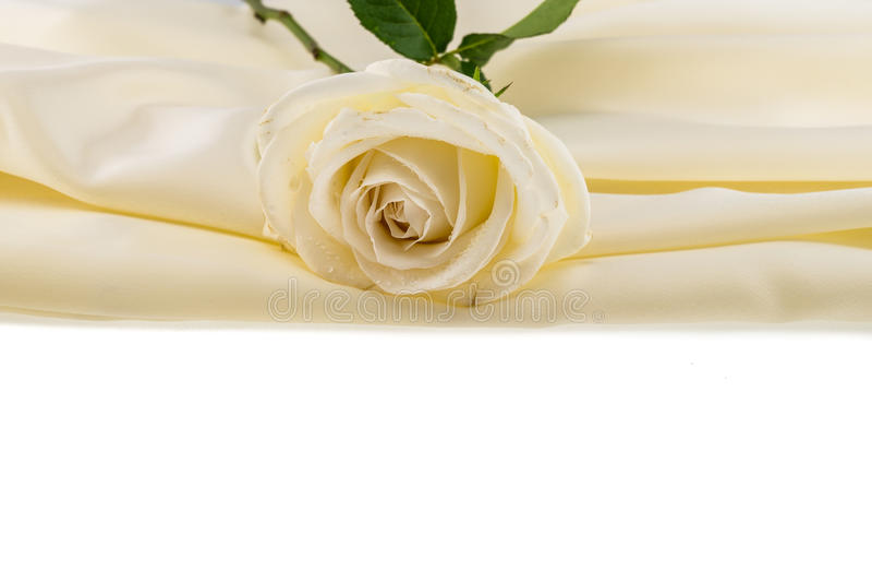 White rose on ivory silk satin royalty free stock images