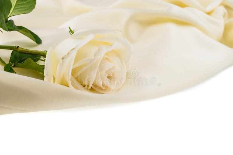 White rose on ivory silk satin royalty free stock photo