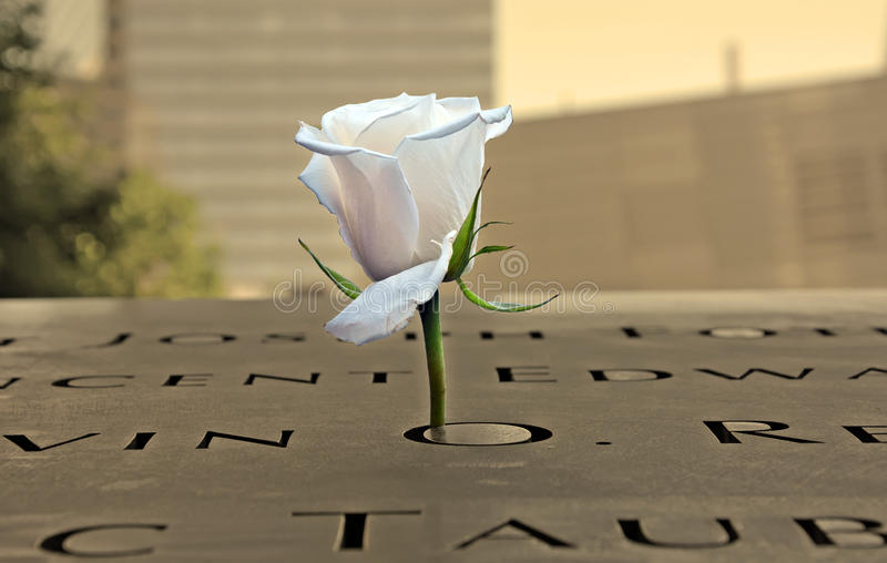 White rose at the 9-11 Memorial royalty free stock photos