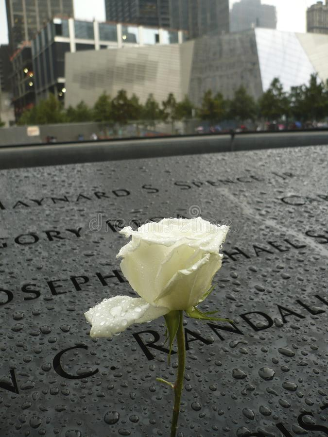 White Rose in Nine Eleven Memorial. A single white rose in the Nine Eleven Memorial after it rained stock images