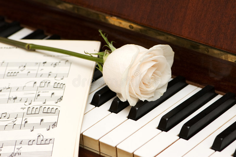 White rose over music sheets stock image