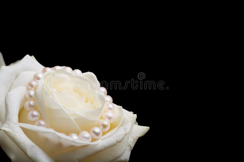 White rose with pearls royalty free stock image