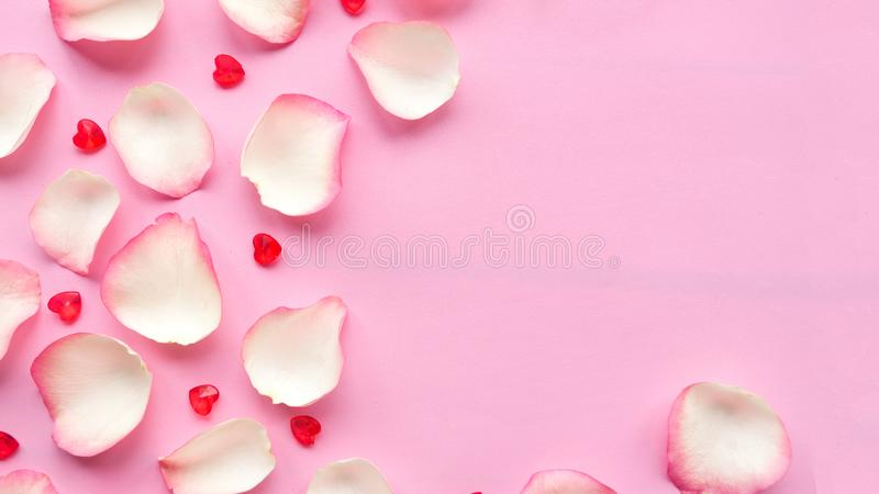 White rose petals on pastel pink background. Valentine or wedding abstract background. Copy space for the text royalty free stock images