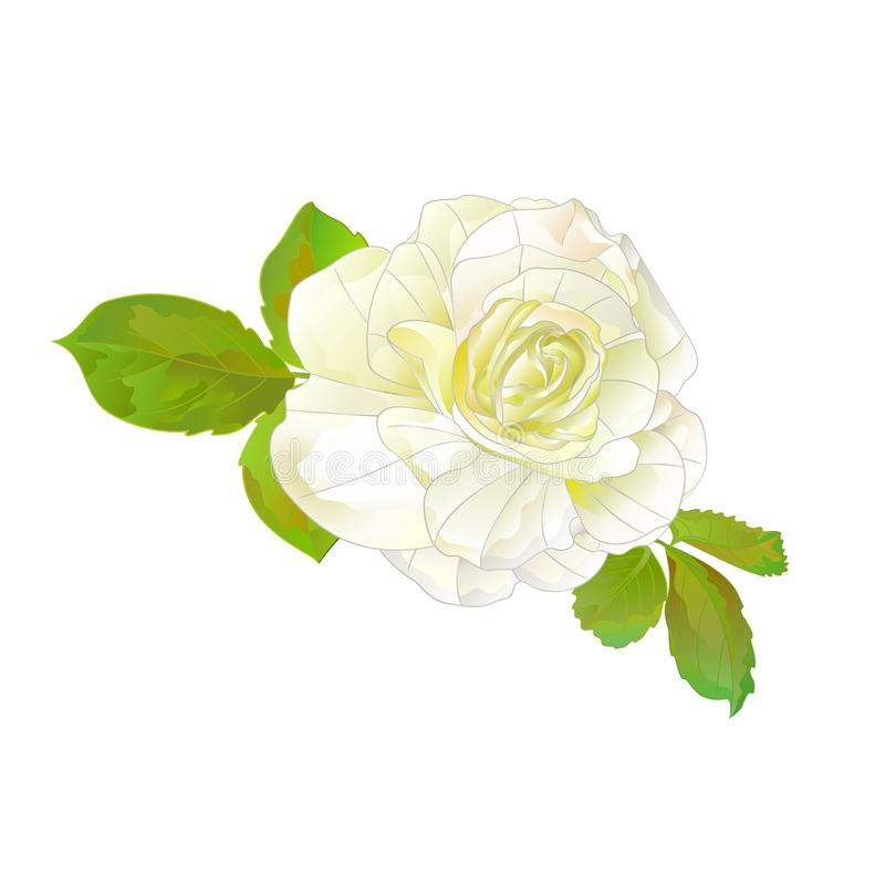 White rose simple stem with leaves watercolor on a white background retro vector illustration editable vector illustration