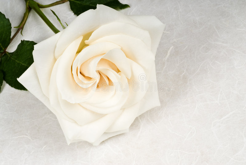 Download White Rose On Textured Paper Stock Photos - Image: 8655803