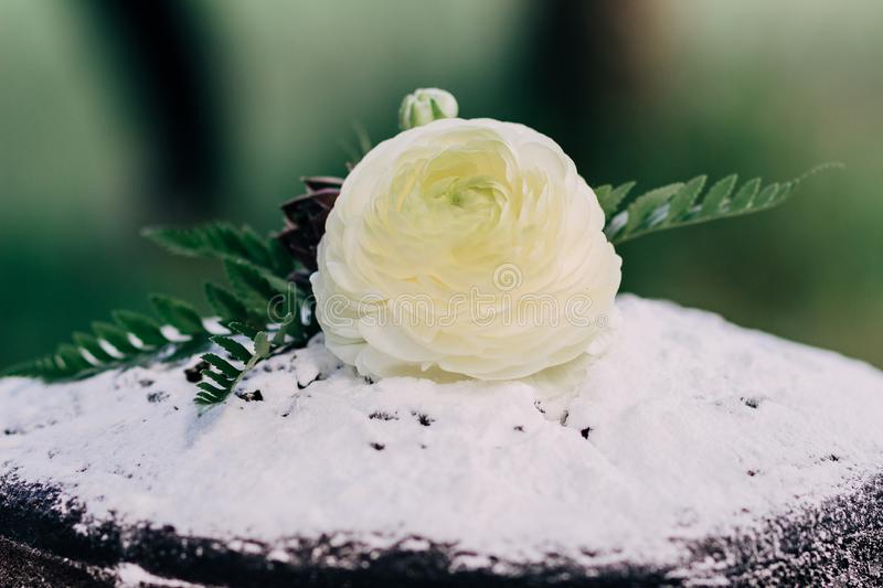White rose on a wedding chocolate cake decorated with powdered sugar royalty free stock photos