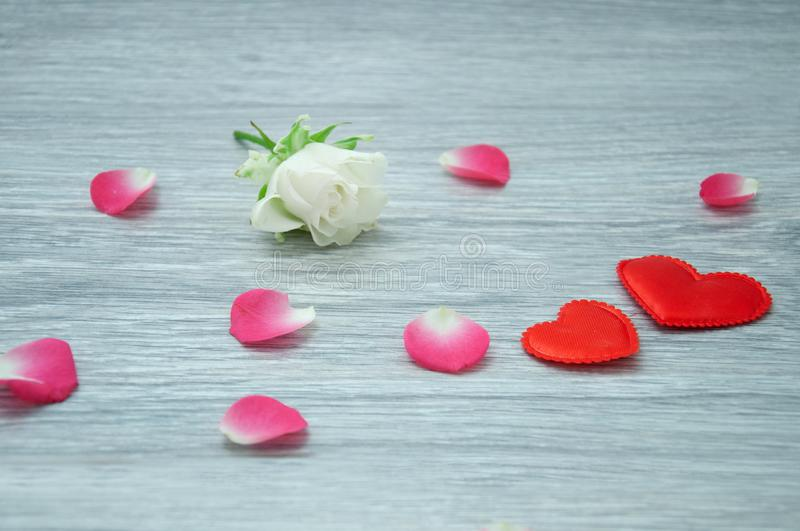 White rose on a wooden, gray table with gently pink petals and silk, red hearts. Two hearts lie on the background of rose petals royalty free stock photo