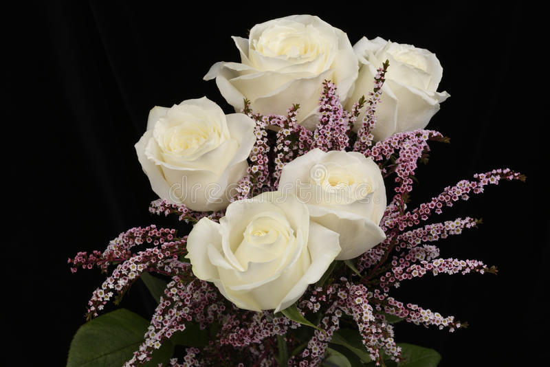 White roses stock photography