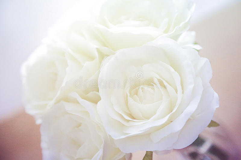 White roses. Four white roses bouquet in blossom royalty free stock photo
