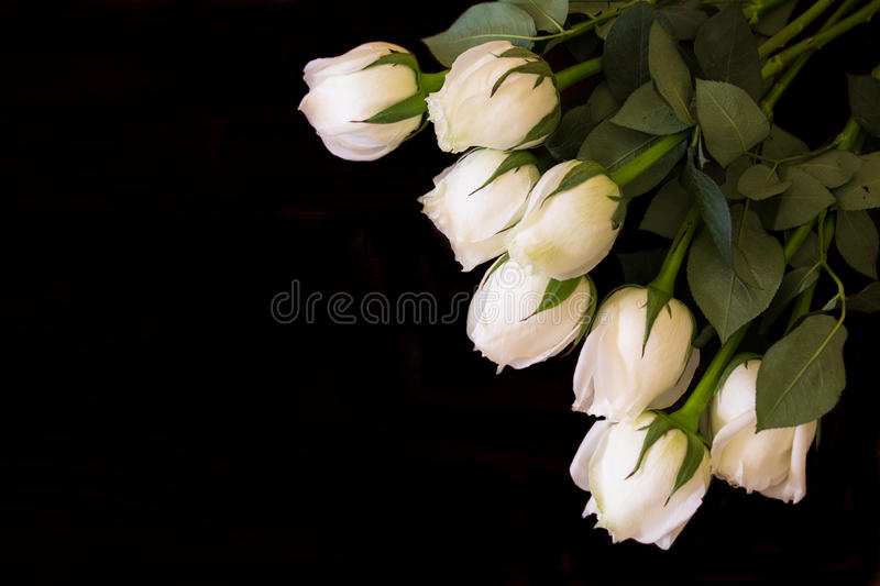 WHITE ROSES. LOVELY FLOWER TO GIVE AND SHOW YOUR PURITY HEART TO YOUR SPECIAL stock image