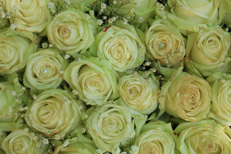 White roses and pearls royalty free stock photography