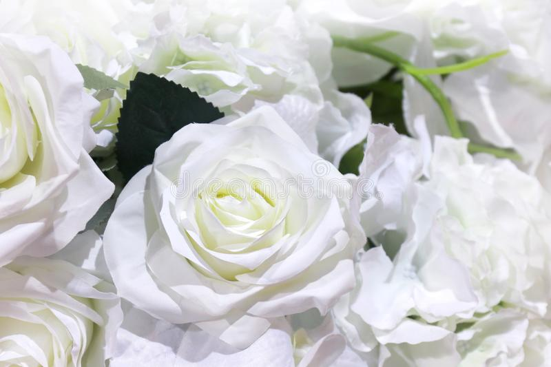 White roses plastic beautiful for background stock photography