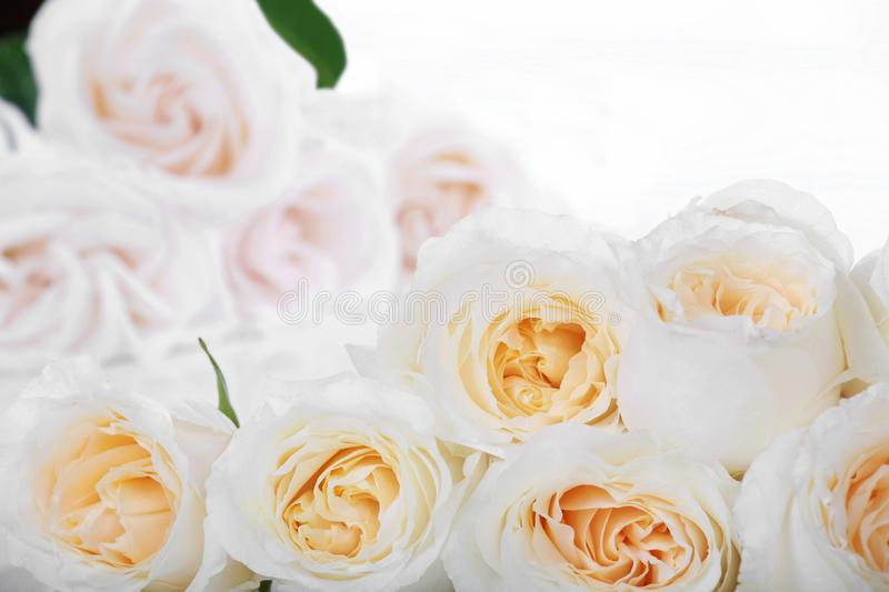 White roses with yellow centers royalty free stock photography