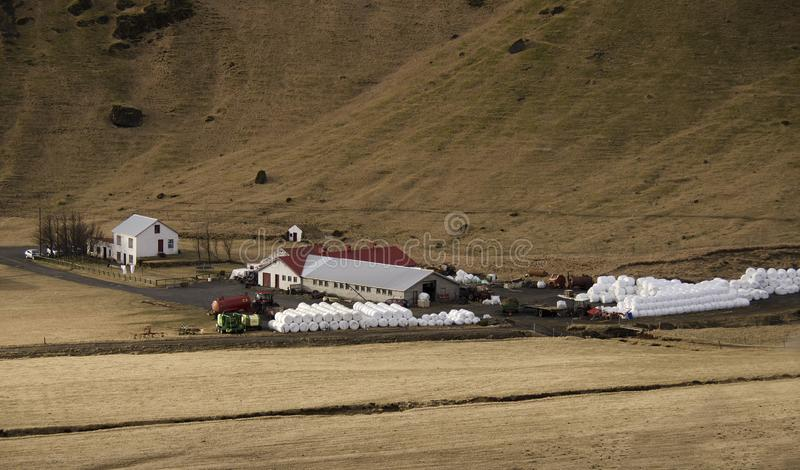 Traditional farming in Iceland. White round bales with grass lying near a farm on a dry yellow grass in Iceland stock images
