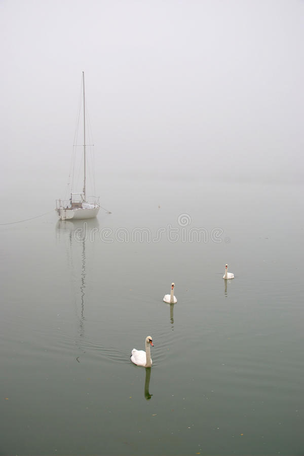 White Sailing Boat And 3 Swans in The Fog royalty free stock image
