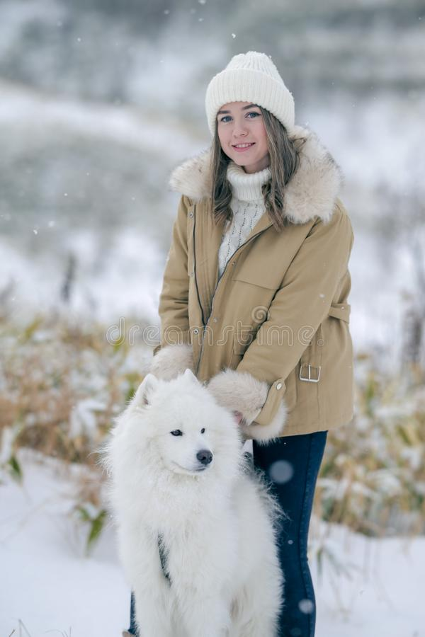 A young girl walks in winter with a white Samoyed dog in a snowy meadow in the forest stock images