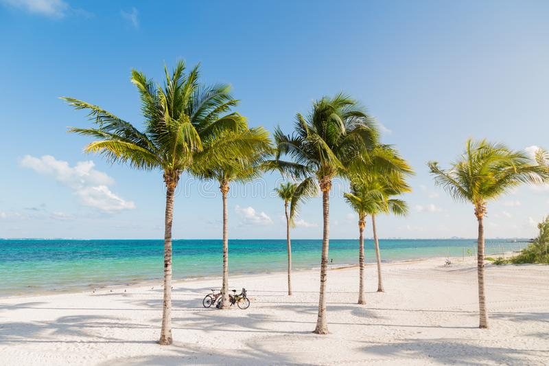 White sand beach in Cancun, Mexico, with palm trees with bicyles leaning up against them. White sand beach in Cancun, Mexico, with palm trees with bicyles royalty free stock photography