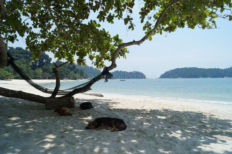 White sand and clear blue waters of tropical island Pangkor, Malaysia. Stray dogs sleeping on the beach. stock images