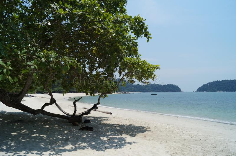 White sand and clear blue waters of tropical island Pangkor, Malaysia. Stray dogs sleeping on the beach. stock photography