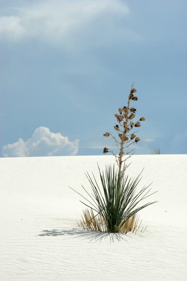 White sand dunes stock photography