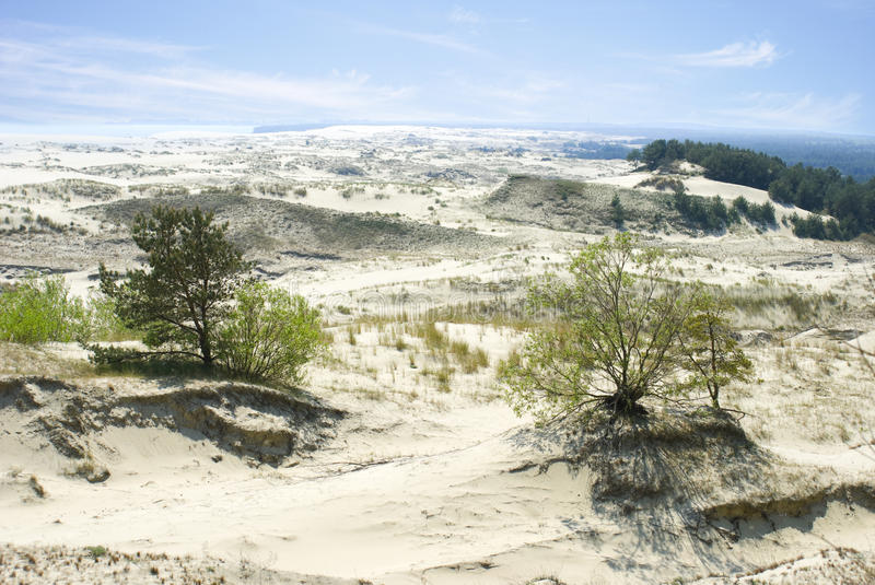 White sand dunes on the Curonian Spit. Curonian Spit, Russia - MAY, 25, 2016 White sand dunes on the Curonian Spit stock photography