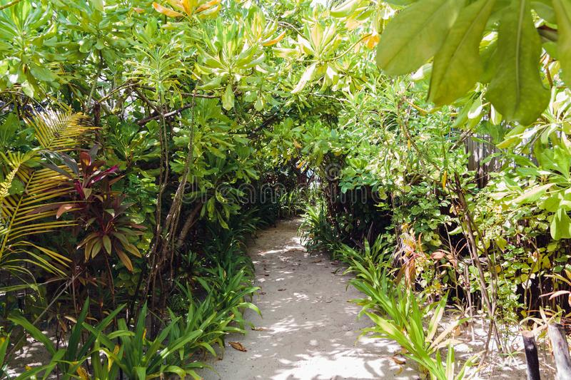 Path in the forest on a maldivian island stock photography