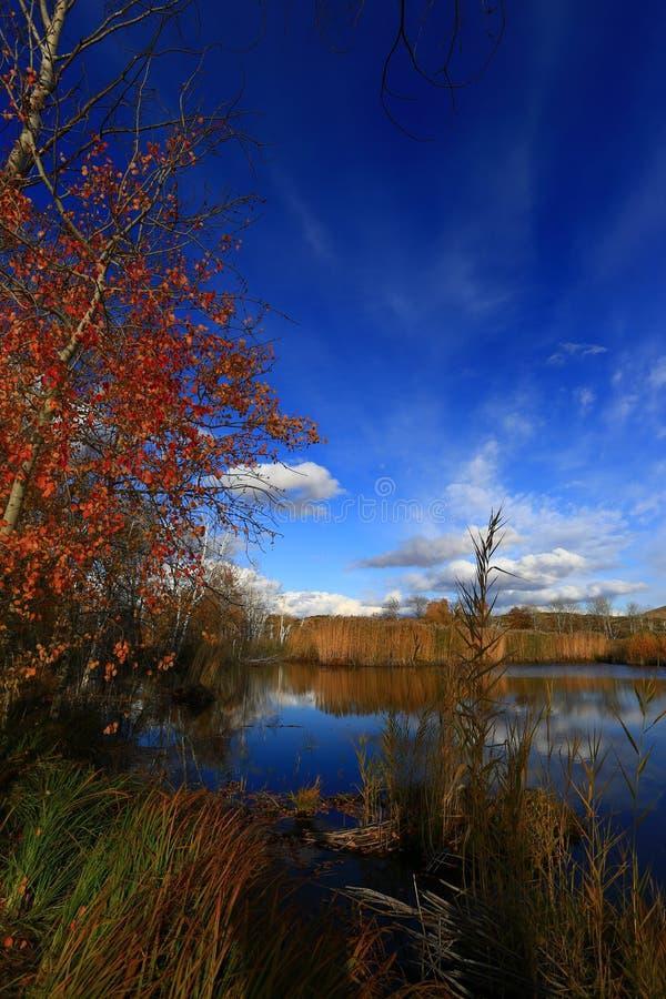 White Sand Lake golden autumn royalty free stock images