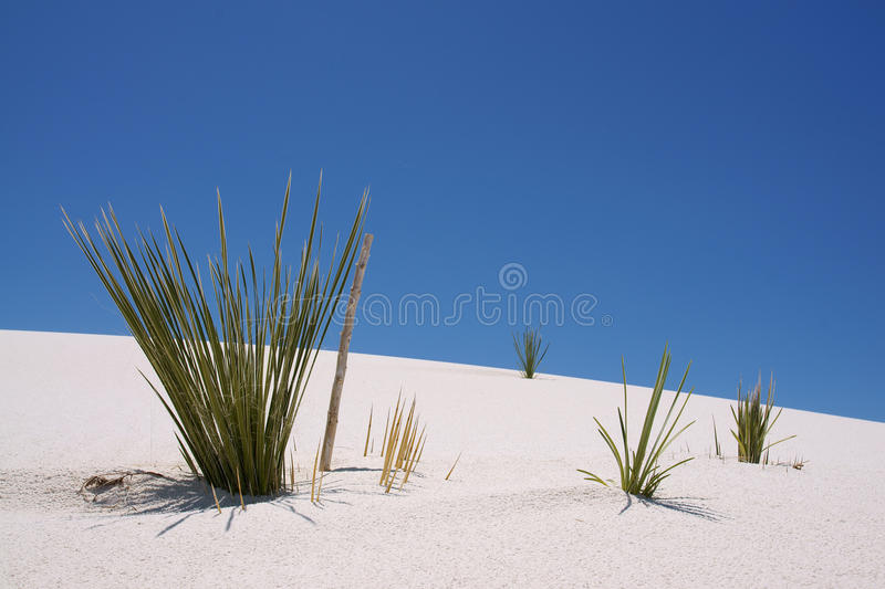 White Sand, New Mexico. Plant on a sand dune in white sands national monument New Mexico, USA stock images