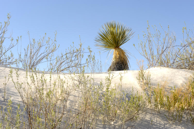 Download White Sands stock image. Image of sand, heat, background - 14075921