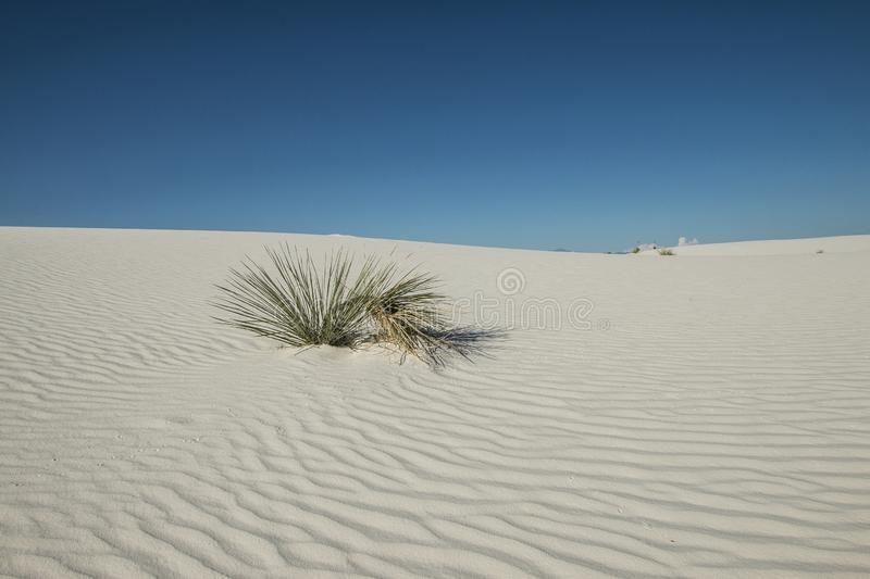 White Sands, National Monument, New Mexico, USA. royalty free stock photo