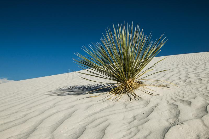 White Sands, National Monument, New Mexico, USA. National Monument, White Sands is in New Mexico, USA. It is no sand but Gypsum royalty free stock image
