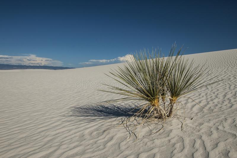 White Sands, National Monument, New Mexico, USA. National Monument, White Sands is in New Mexico, USA. It is no sand but Gypsum stock photography