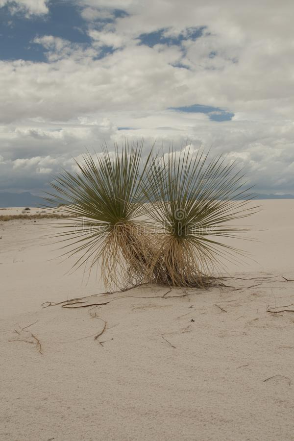White Sands, National Monument, New Mexico, USA. royalty free stock image