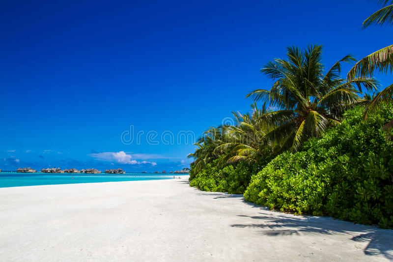 White sandy tropical beach with palm trees and water bungalows stock photos