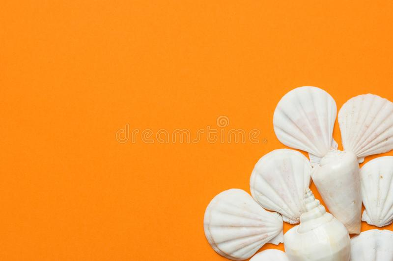 White sea shells of different shapes spiral flat on vibrant orange background. Summer beach seaside vacation spa wellness stock photography
