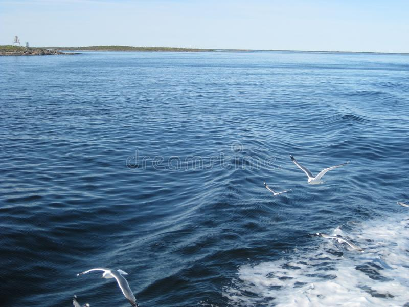 White sea. The view from the sea to the shore. Seagulls fly over the water stock photo
