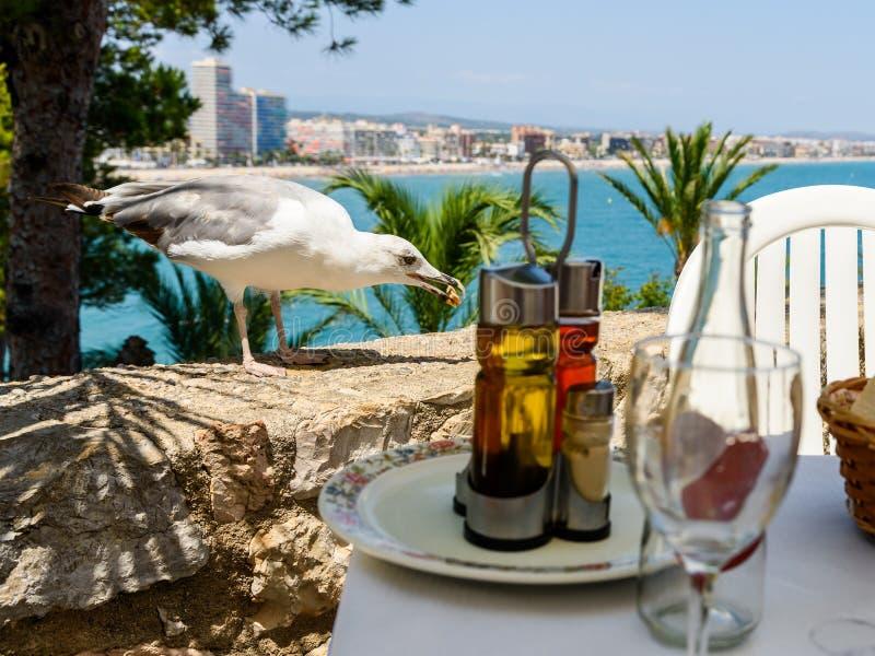 White Seagull Bird Waiting To Feed Next To Restaurant Table. White Seagull Bird Waiting To Feed Next To Outdoor Restaurant Table stock photography
