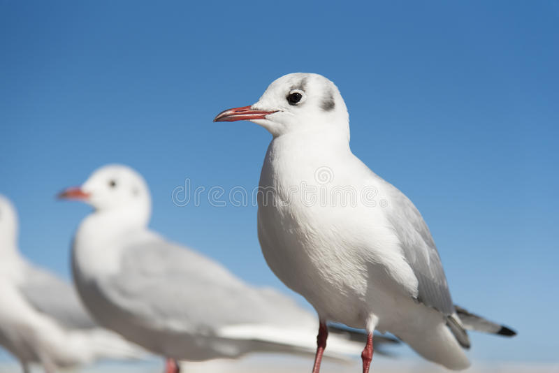 Download White Seagull Birds In Eye Focusing Stock Photo - Image of post, animal: 90590960