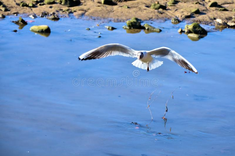 White seagull stock photography
