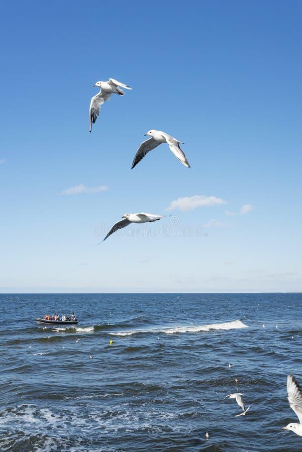White seagulls royalty free stock photo