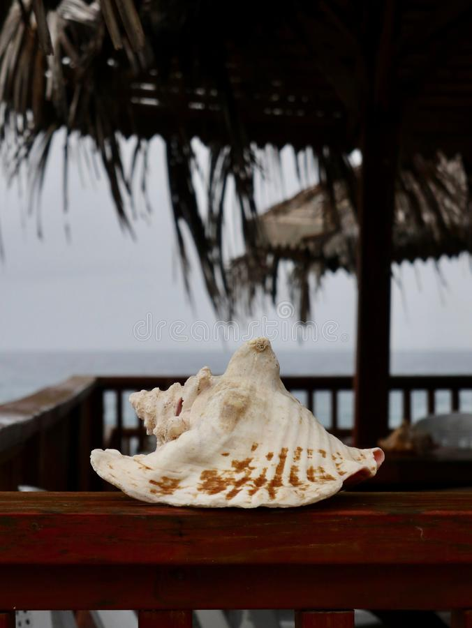 White Seashell on Tropical Deck stock images