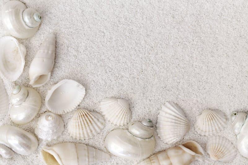 Download White seashells stock photo. Image of nobody, beach, frame - 15075486