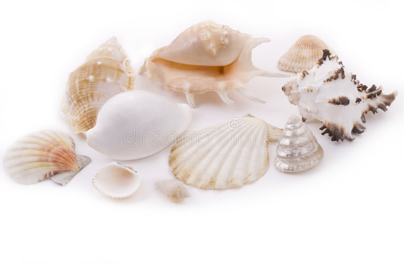 White seashells royalty free stock photos