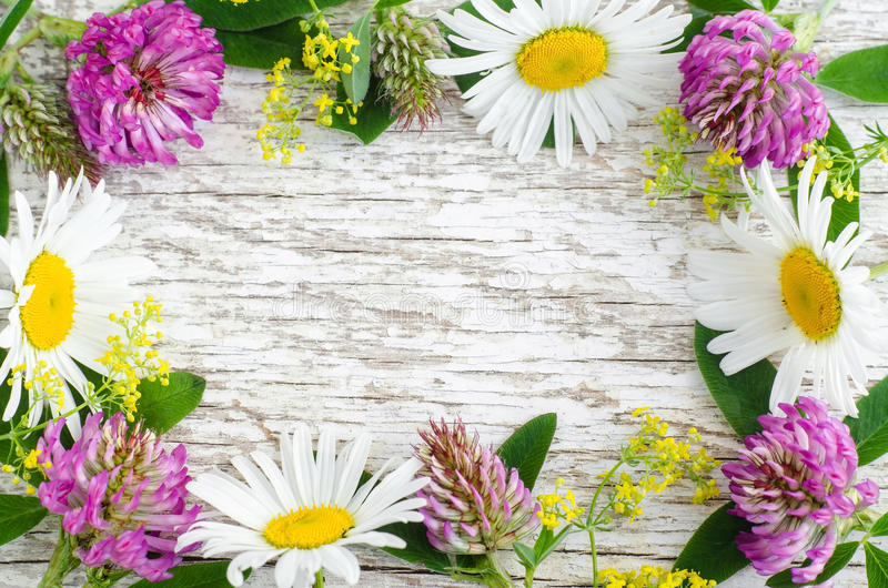 White shabby wooden background with wild flowers frame. Backdrop with copy space, stock images