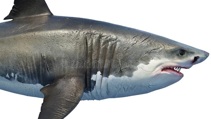 White shark marine predator big, side view. Close view. 3D rendering stock illustration