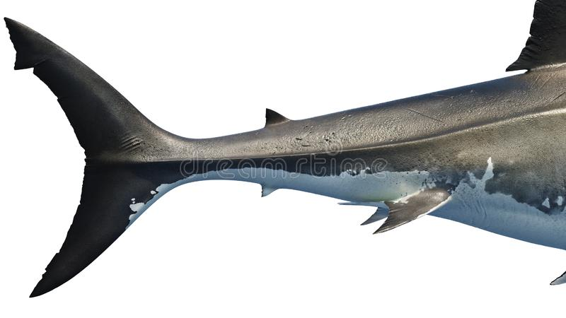 White shark marine predator big tail, side view. White shark marine big predator tail, side view, close view. 3D rendering vector illustration