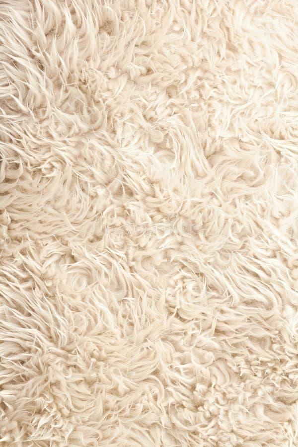 White sheep fur background stock photo