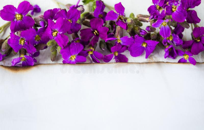 A white sheet of paper burned at the edges, purple flowers from the edge. leaving room for text royalty free stock image