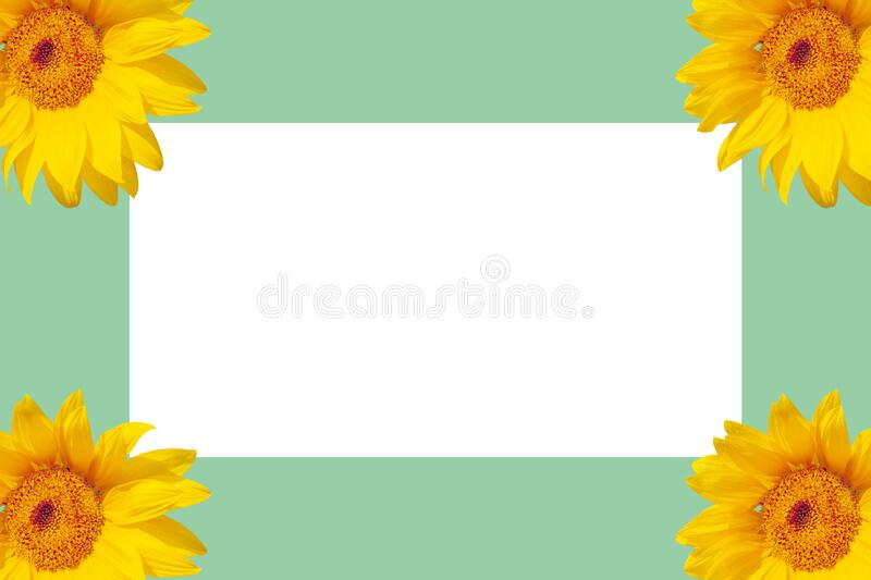 White sheet of paper on a colored background surrounded by sunflowers stock image