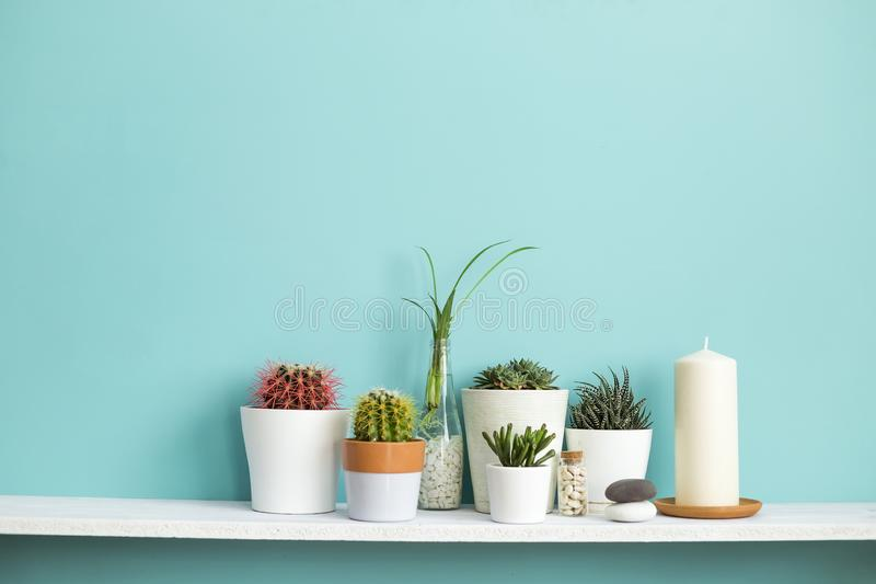 White shelf against pastel turquoise wall with Collection of various cactus and succulent plants in stock image